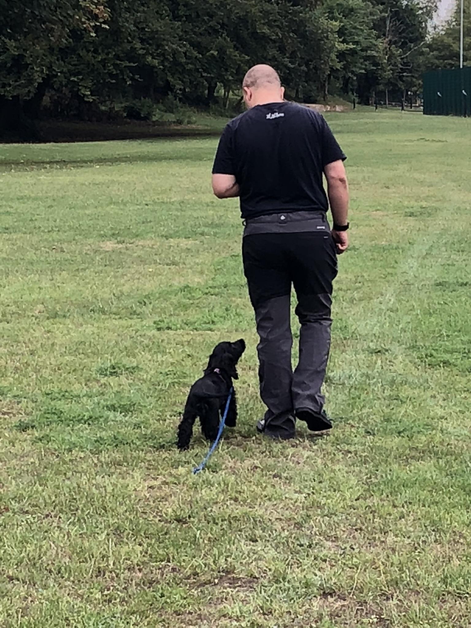 working cocker spaniel puppy training